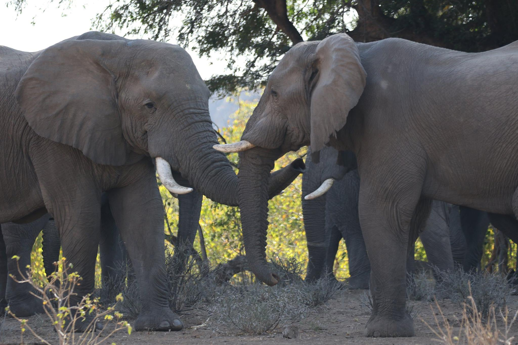 THE PAMS FOUNDATION , WITH HEADQUARTERS IN TANZANIA, IS ON THE FRONT LINES OF THE ANTI-POACHING FIGHT TO SAVE ELEPHANTS. IMAGE: ©PAMS FOUNDATION