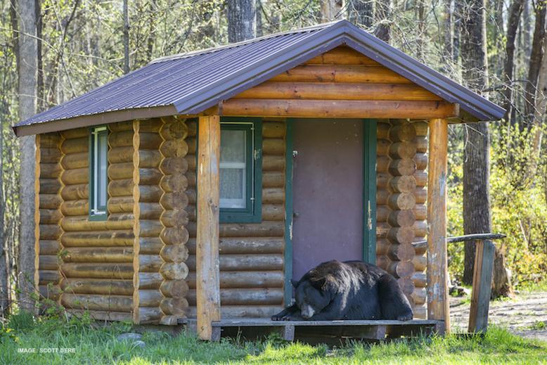 WE HAD SOME WILDLIFE SURPRISES IN 2018, LIKE THIS BLACK BEAR ASLEEP IN THE DOORWAY. IMAGE: WILDLIFE PHOTOGRAPHER ©SCOTT DERE