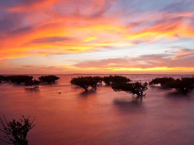 SUNSET ON THE MANGROVES ON MAGDALENA BAY, BAJA CALIFORNIA SUR, MEXICO. IMAGE THANKS TO RED TRAVEL MEXICO