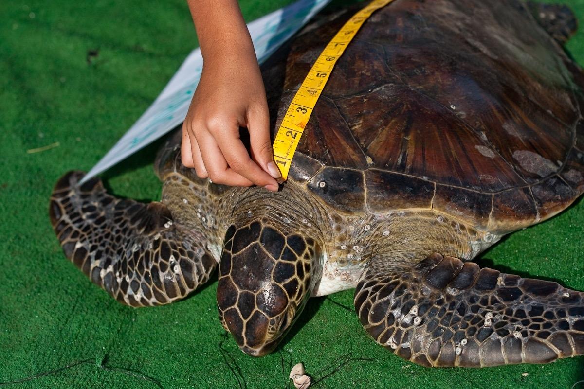 Baja Ocean Wildlife Expedition