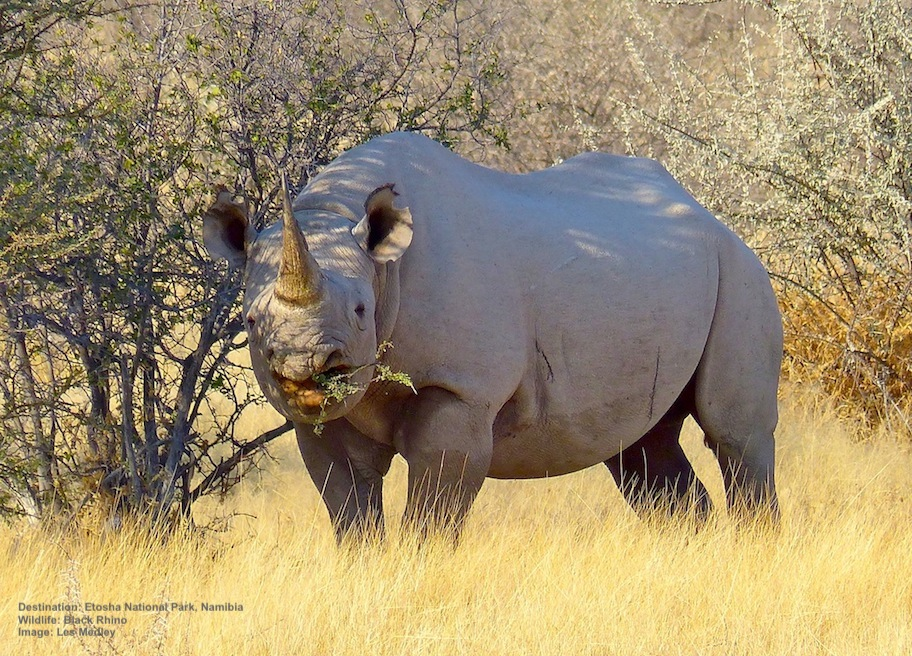 The Best 7 Places to See African Rhinos