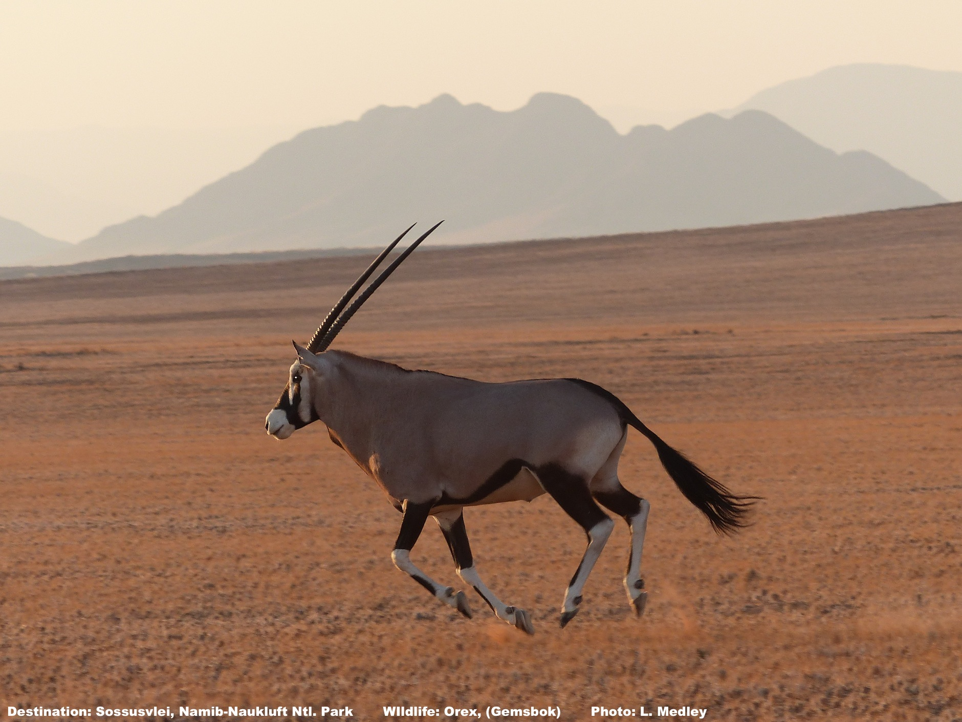 6 Indisputable Facts about Sossusvlei, Namibia