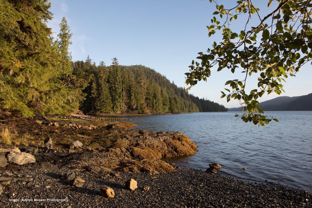 DAy 4: Island Exploration, Marine Wildlife, Bird Watching and Berries