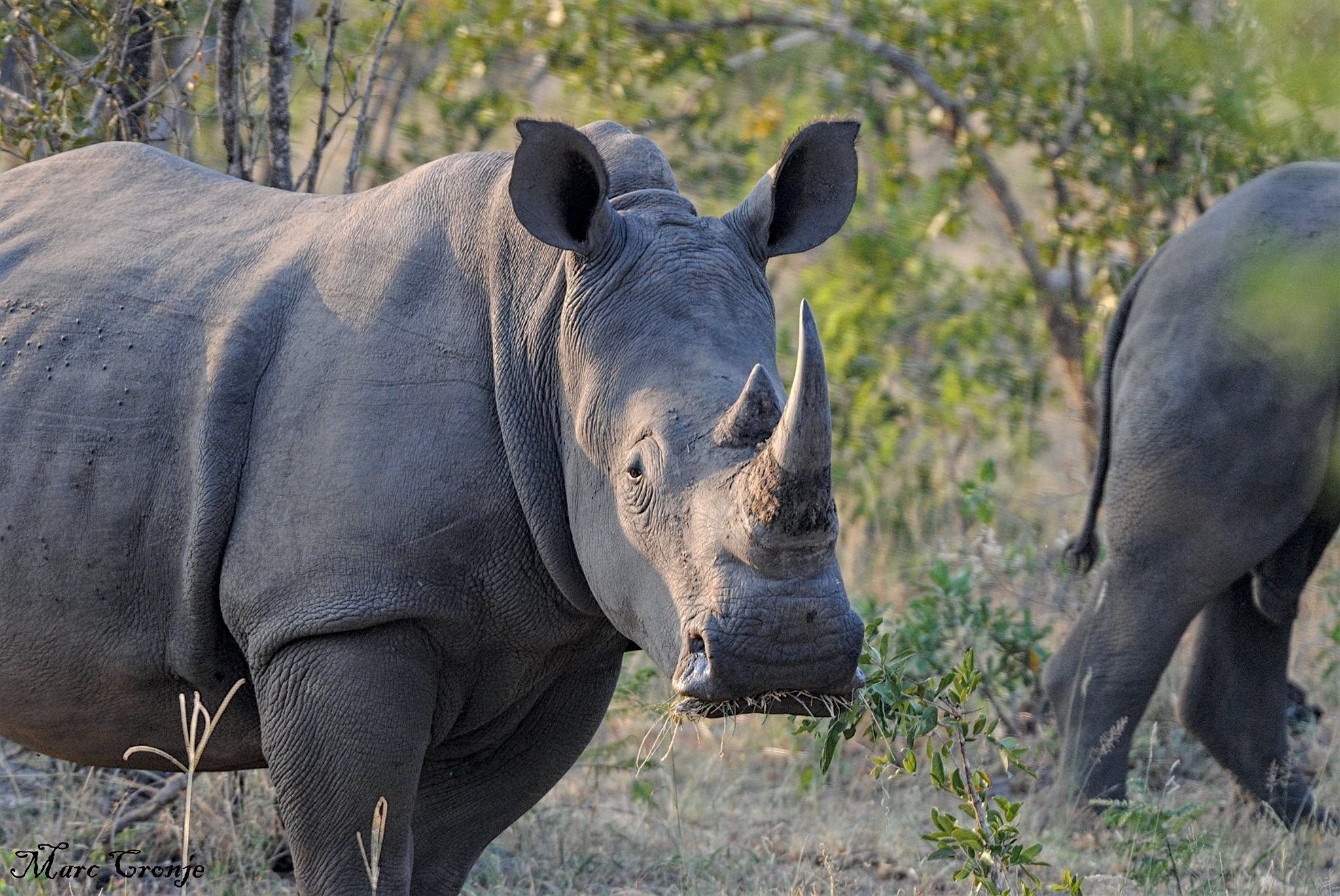 DAY 3-8: KNP, WHITE RHINO