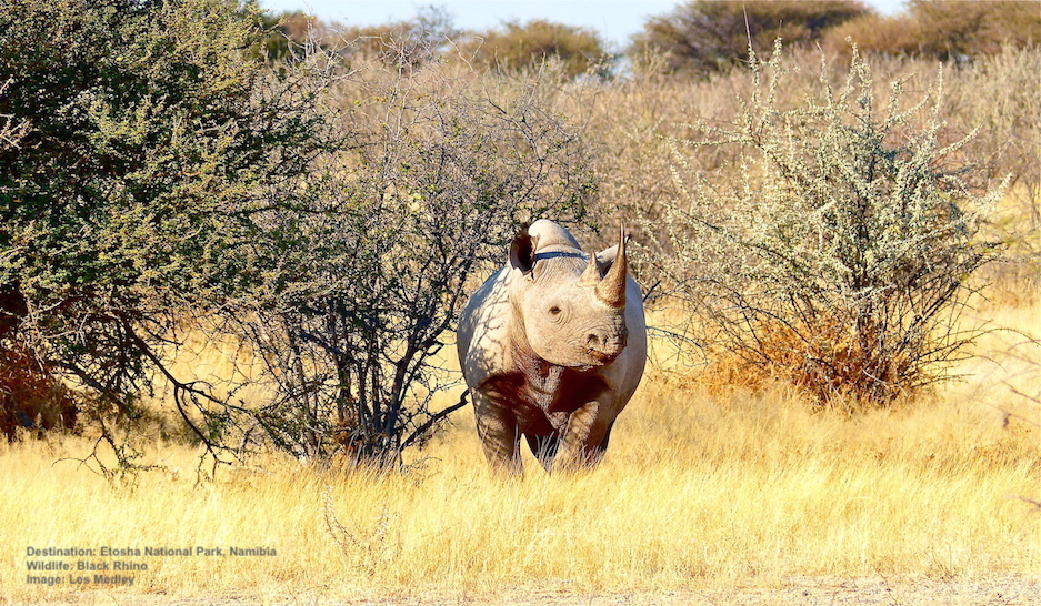 The 7 BEST Places To See African Rhinos