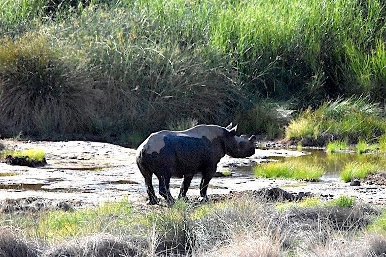 xNTN+Save+the+Rhino+2.jpg