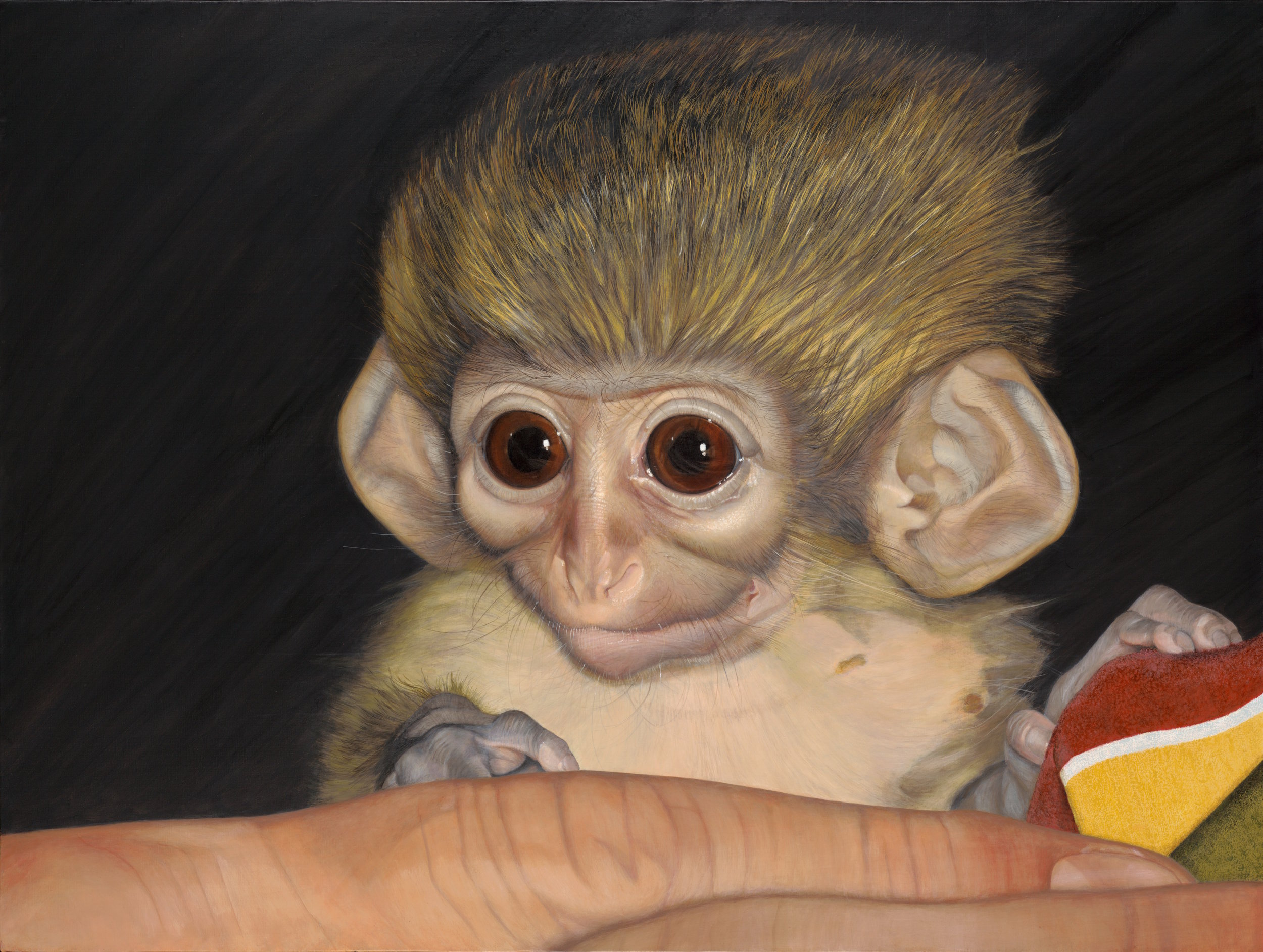 PORTRAIT OF YODA, A TALAPOIN MONKEY. THIS IS ONE OF THE MANY ORPHANED AND TRAUMATIZED BABY PRIMATES RESCUED AND RAISED AT APE ACTION AFRICA. PAINTING BY © ROBIN HUFFMAN, ACRYLIC ON LINEN  36 x 48
