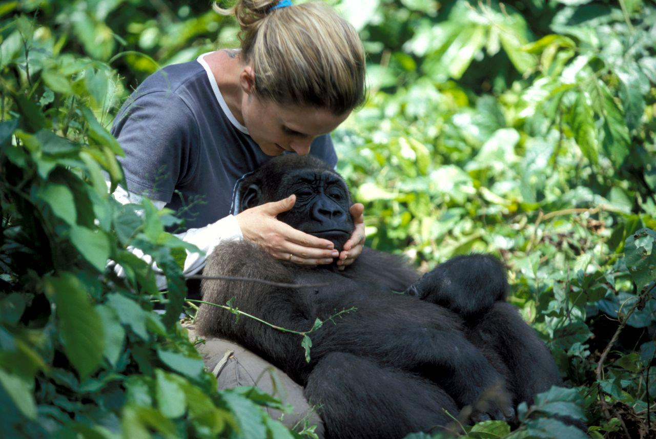 RACHEL HOGAN AND N'KAN DANIEL, THE RESCUED WESTERN LOWLAND GORILLA THAT ALTERED THE COURSE OF HER LIFE. PHOTO FROM 2005. IMAGE: ©IFAW WITH THANKS TO  APE ACTION AFRICA FACEBOOK .