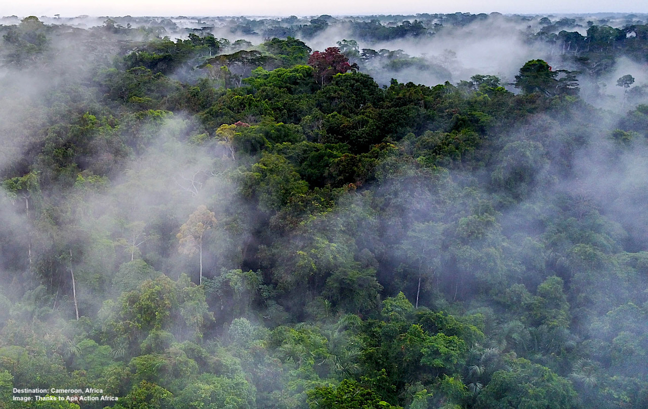 THE CAMEROON RAINFOREST, THE PERFECT BUT QUICKLY DISAPPEARING AND FRAGMENTING HABITAT FOR PRIMATES. DRONE IMAGE: ©GERRY ELLIS/ APES LIKE US.