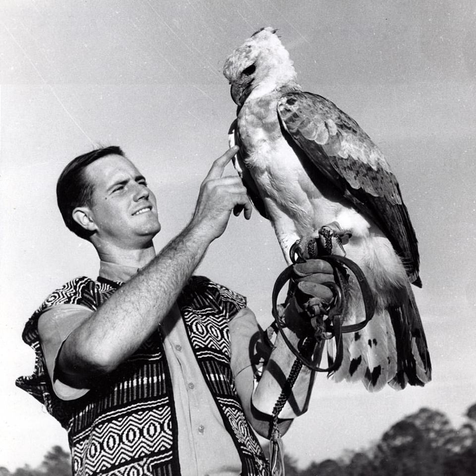 IN 1955, THE 24-YEAR OLD JIM FOWLER TRAVELED TO BRITISH GUIANA (NOW KNOWN AS GUIANA) TO STUDY THE HARPY EAGLE, ONE OF THE WORLD'S LARGEST RAPTORS. THIS IMAGE WAS TAKEN IN 1963 THE YEAR WILD KINGDOM PREMIERED. IMAGE: THANKS TO MARK FOWLER.