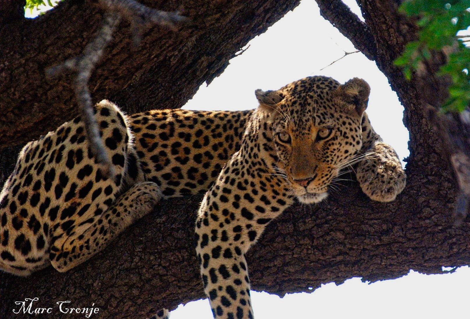 Destination Guide: Kruger National Park, South Africa