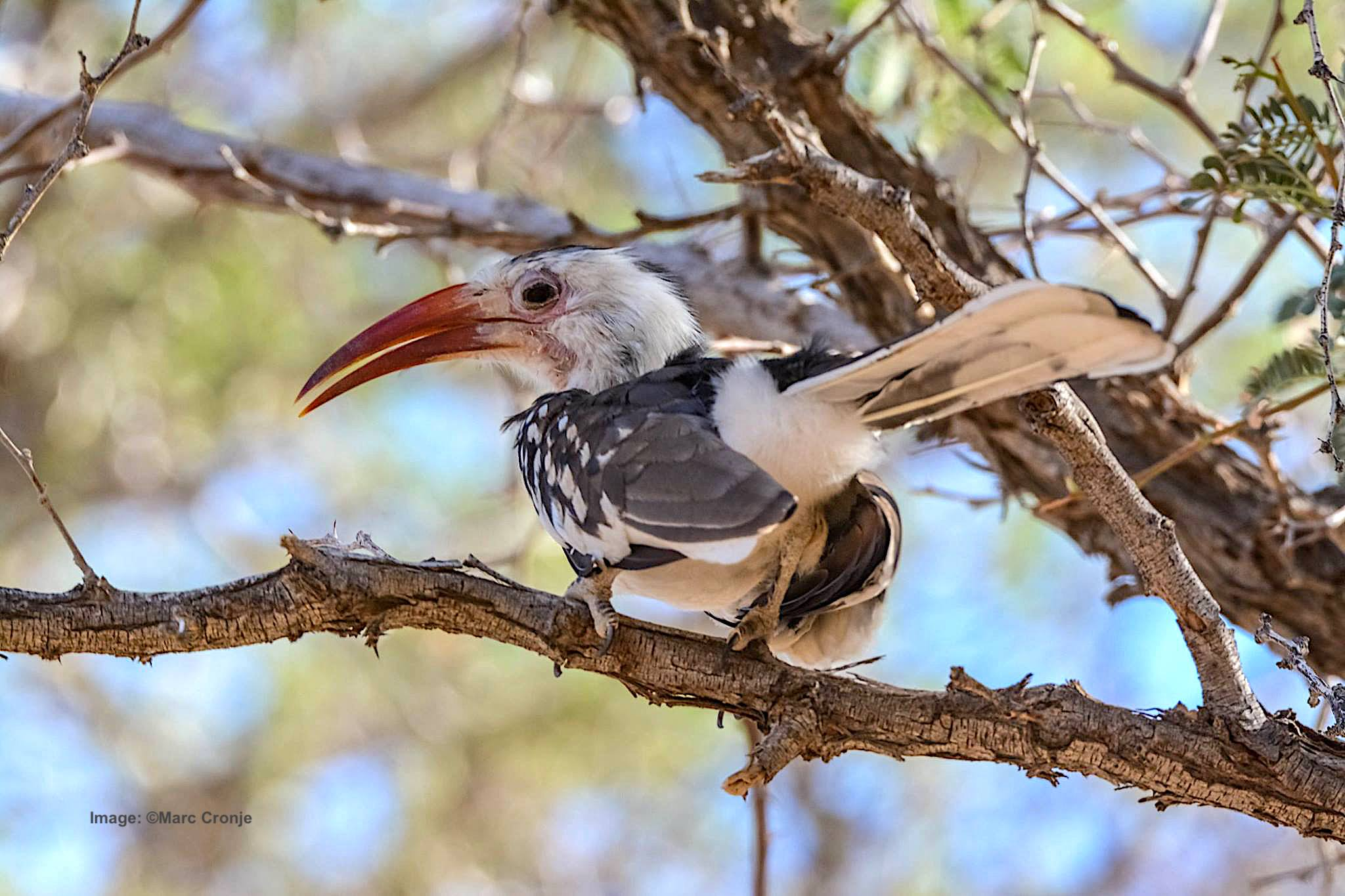 Birds-of-Namibia-Tour.jpg