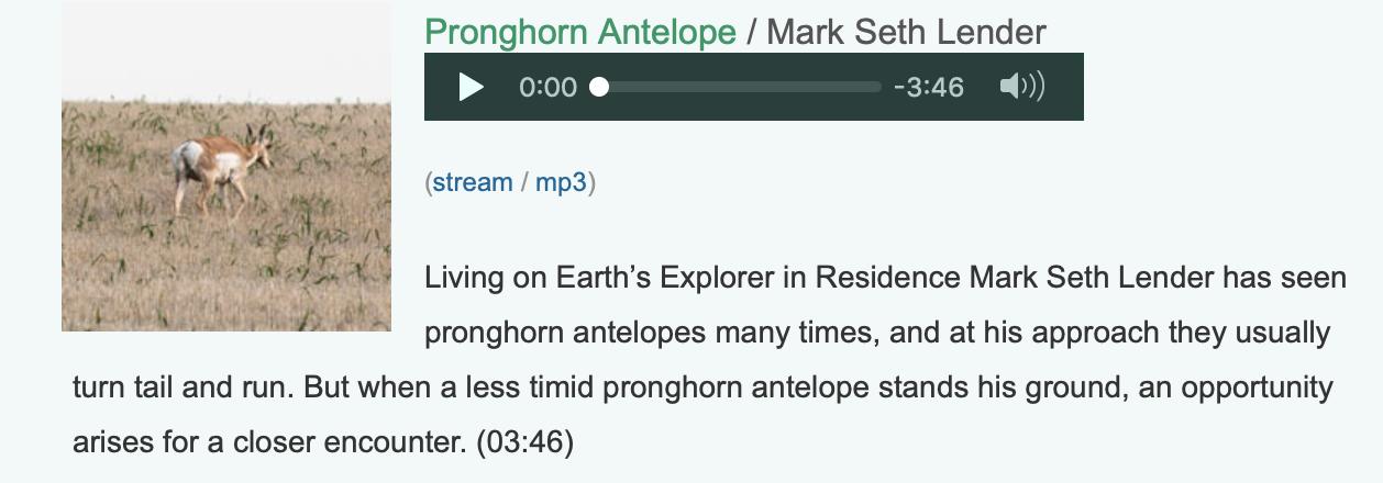 NPR-Mark-Seth-Lender-Pronghorn.png
