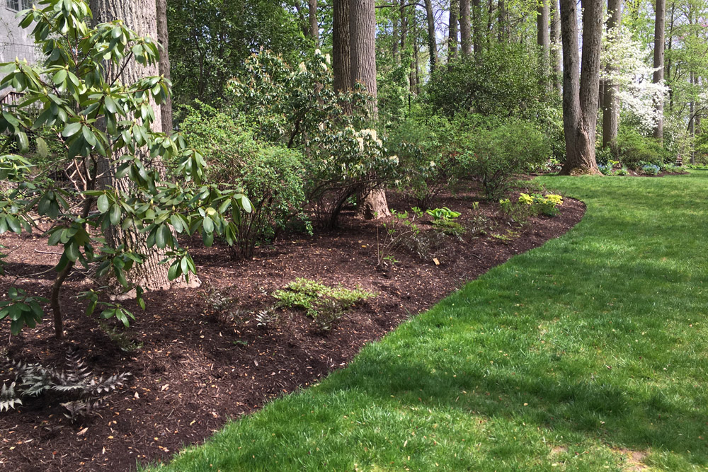 screening-swarthmore-plants-landscaper.jpg