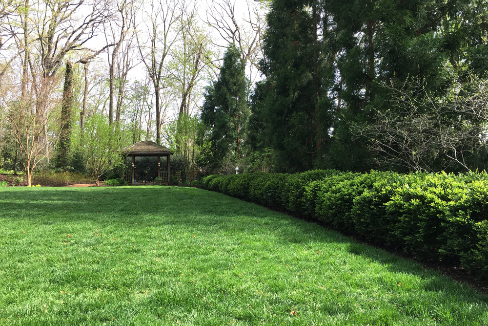 shrubs-block-neighbors-lanscaping.jpg