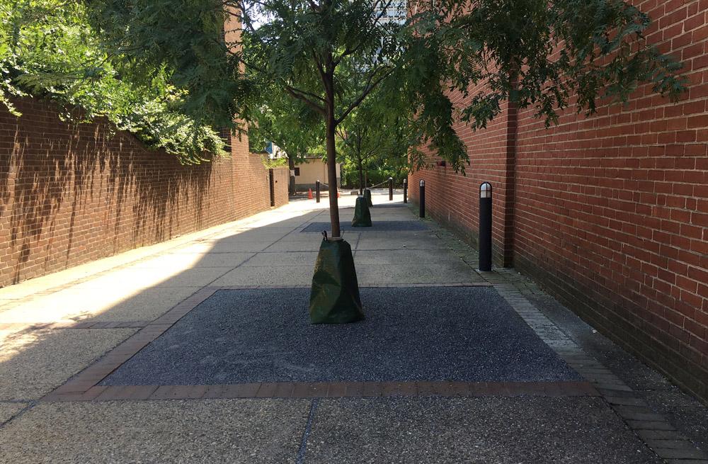 Philadelphia-street-trees-old-city.jpg