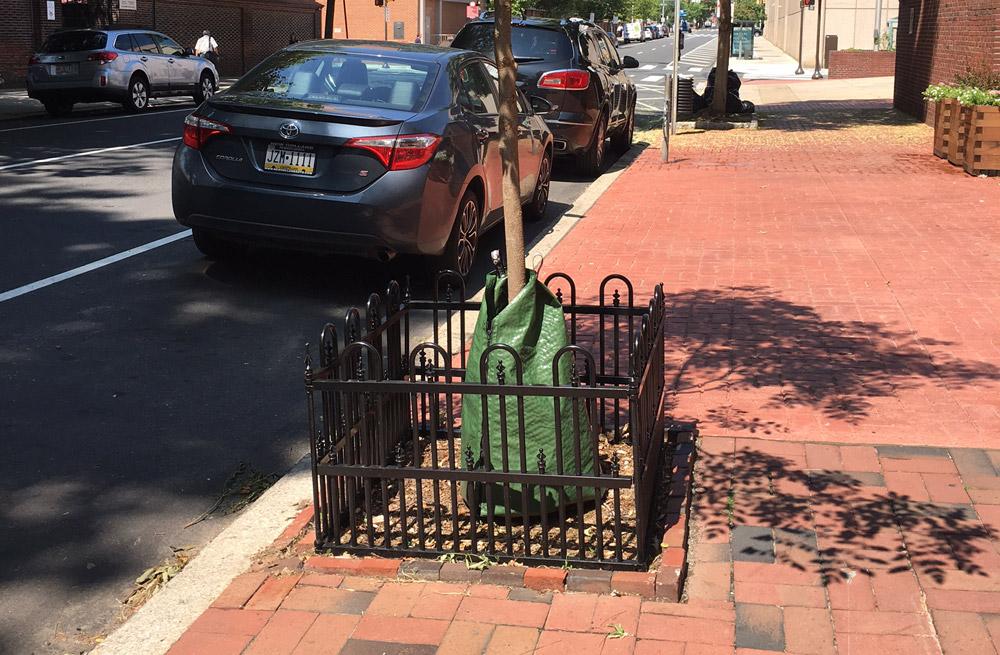 Philadelphia-street-trees-landscapers.jpg