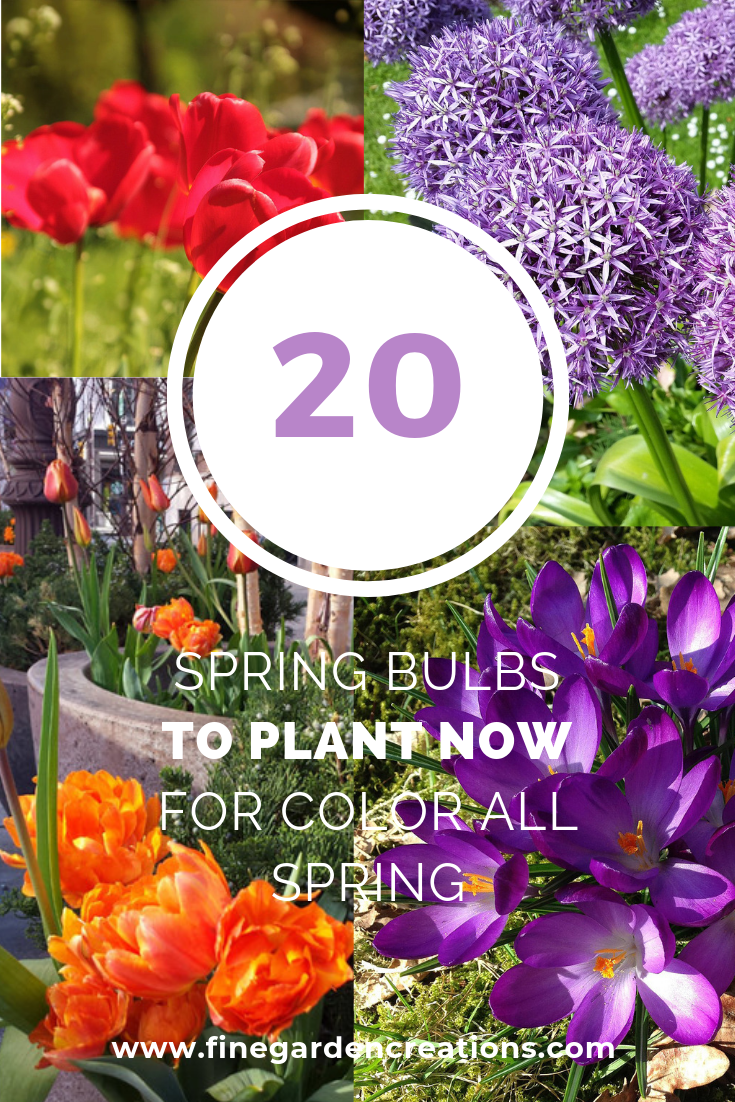 Spring bulbs.png