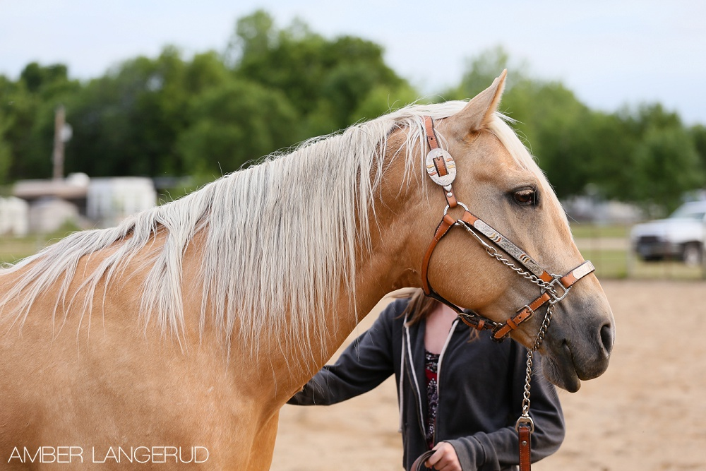 4-H Horse Showmanship | Detroit Lakes Equine Photographer
