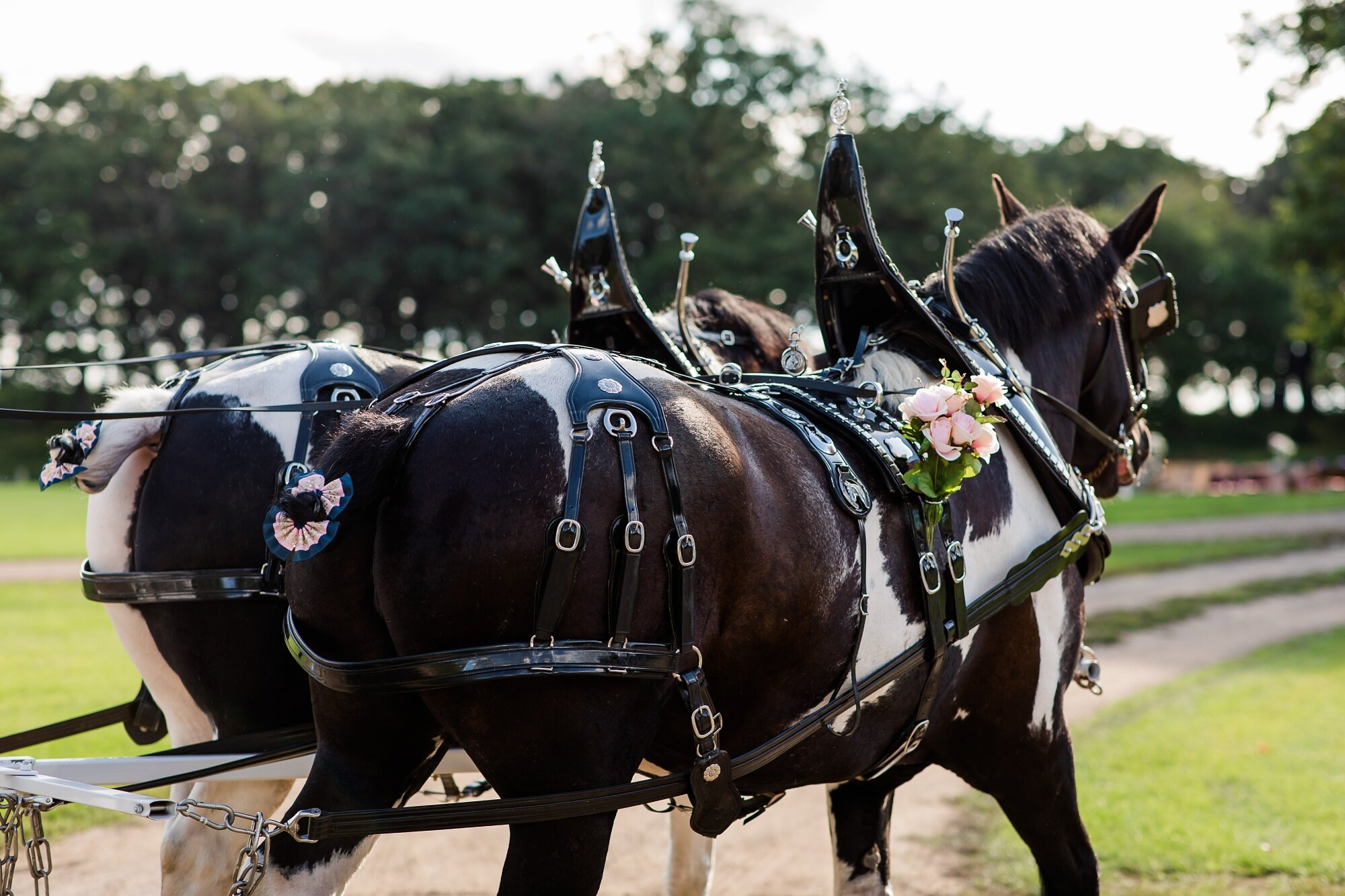 Amber Langerud Photography_Lake Park Minnesota, Outdoor Barn Wedding With Horses_6999.jpg