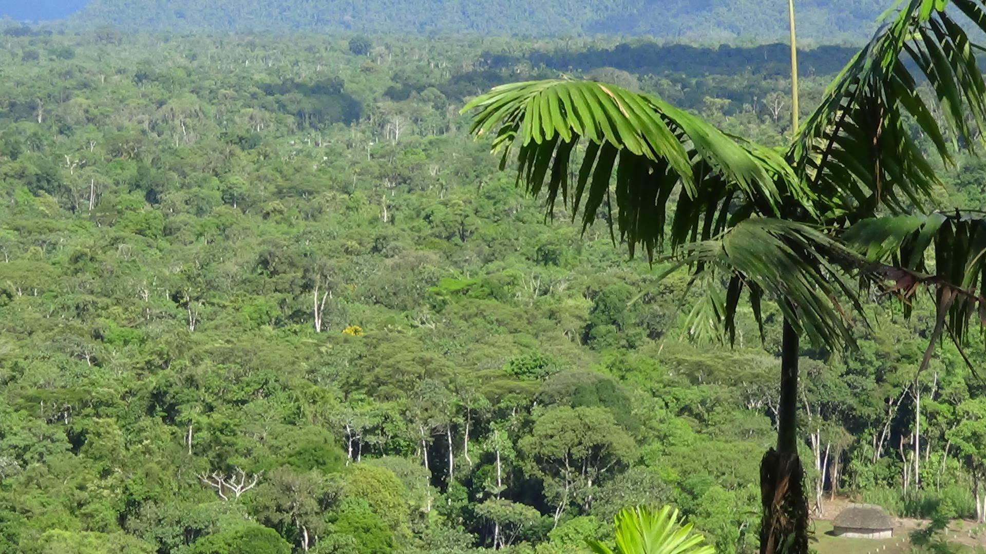 Rainforest top-view