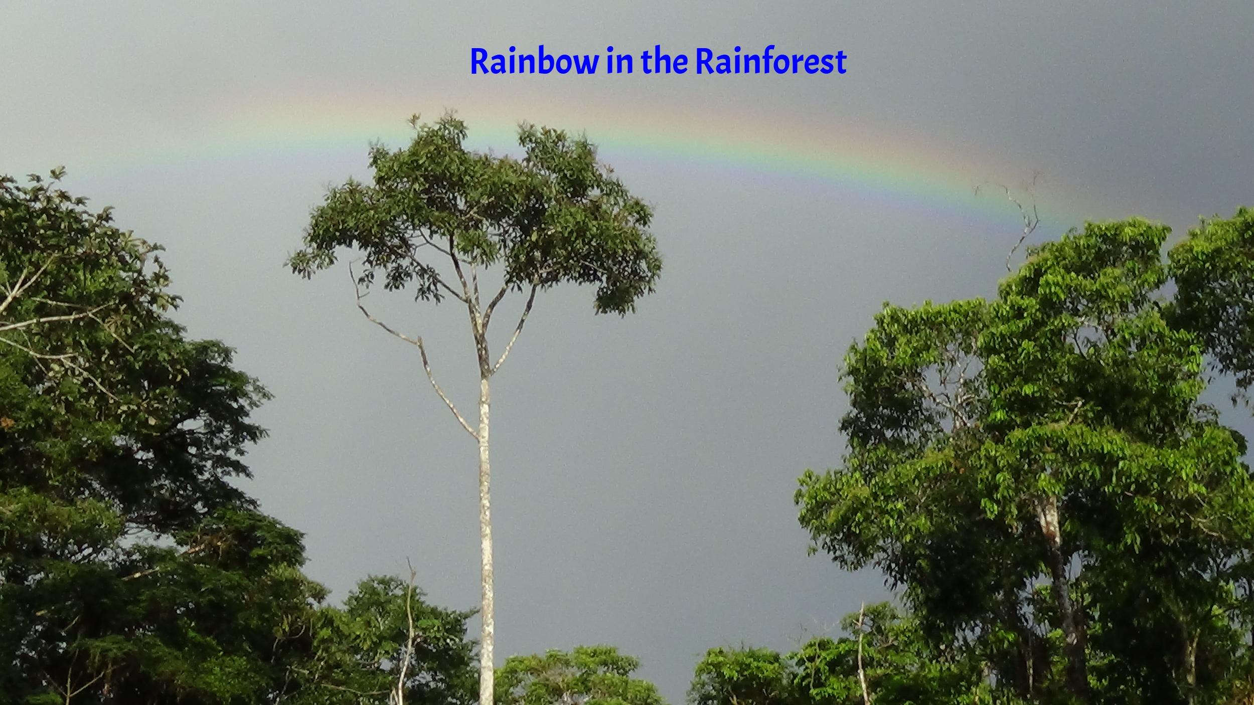 Rainbow in the rainforest