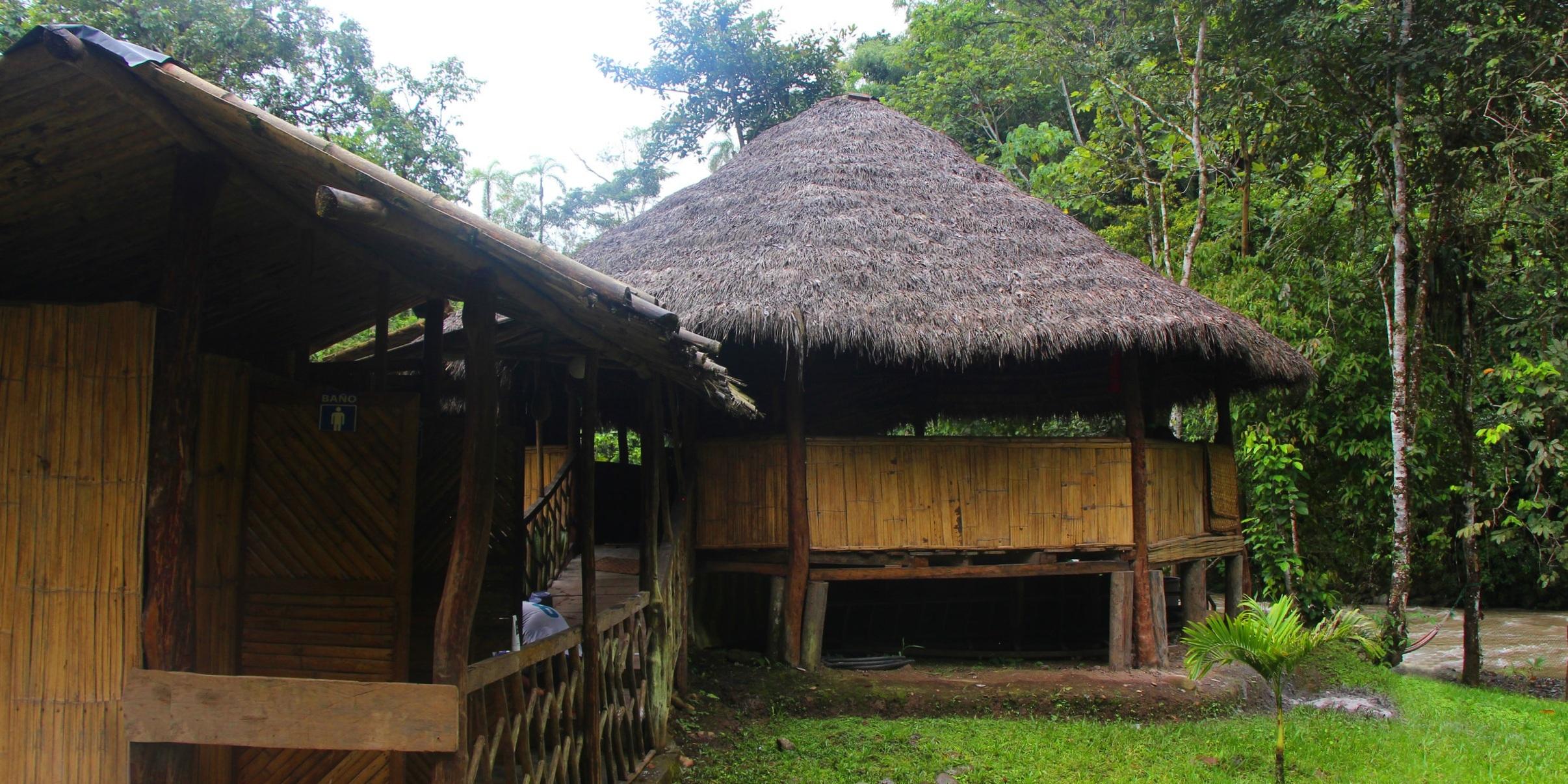 Contact Ayahuasca in ecuador - Spiritual Fulfilment