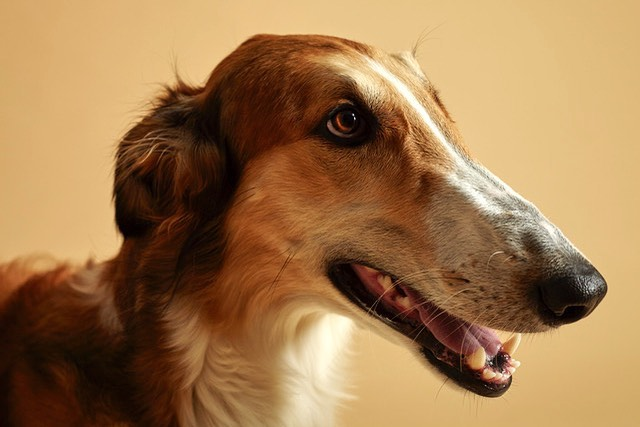 Photography by @warrrenh hair and makeup by me. #borzoi