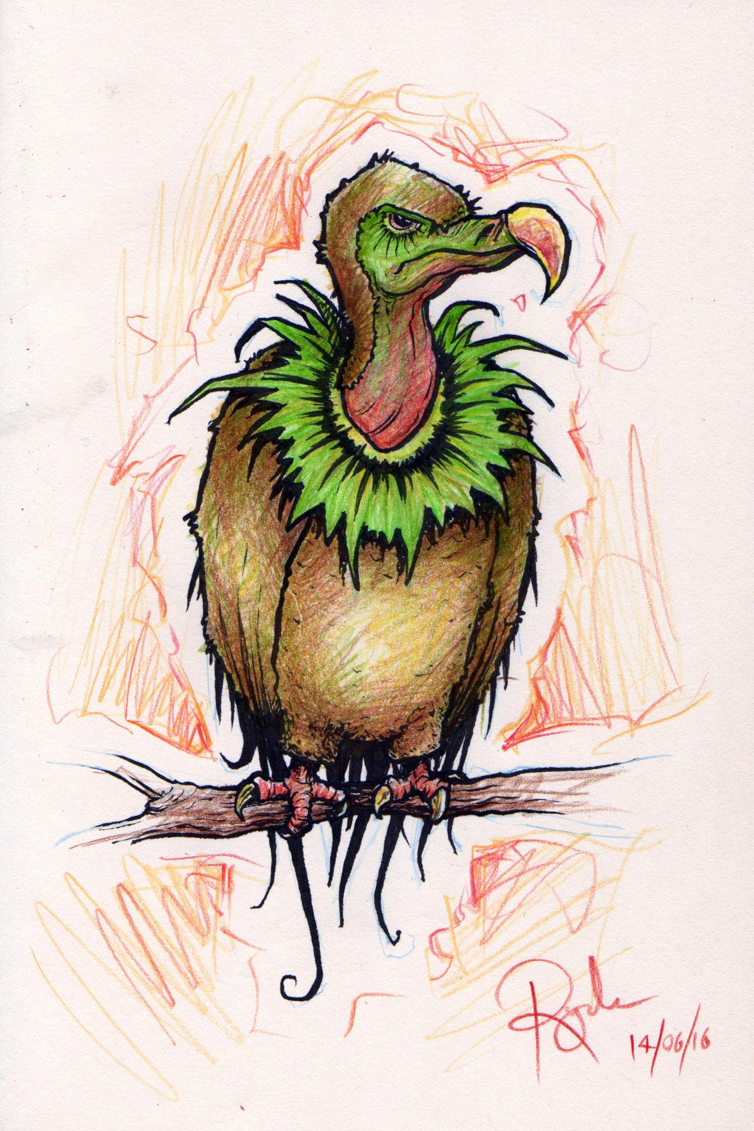 Kiwi Vulture