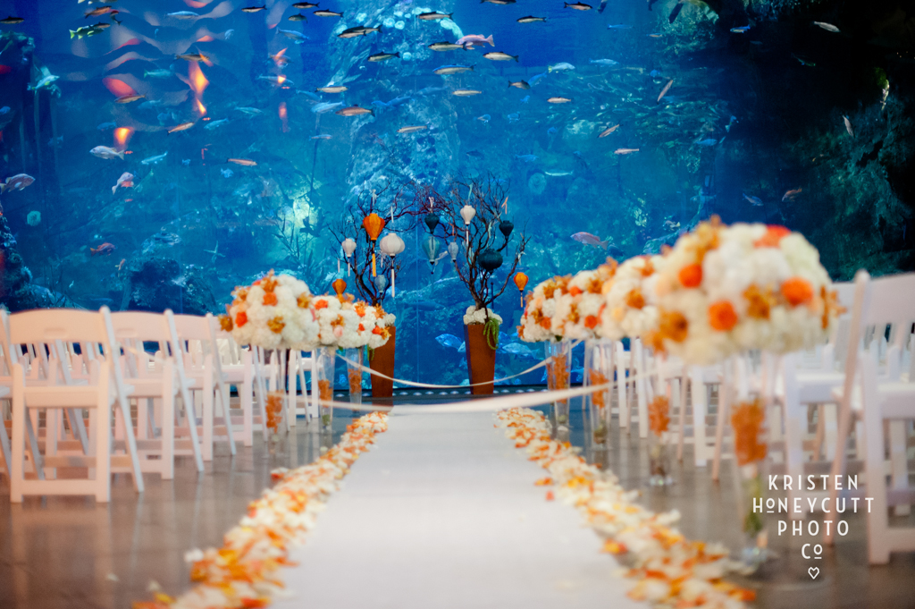 Wedding at the Seattle Aquarium coordinated by New Creations Wedding Design and Coordination   Kristen Honeycutt Photography   Seattle Aquarium Wedding Ceremony