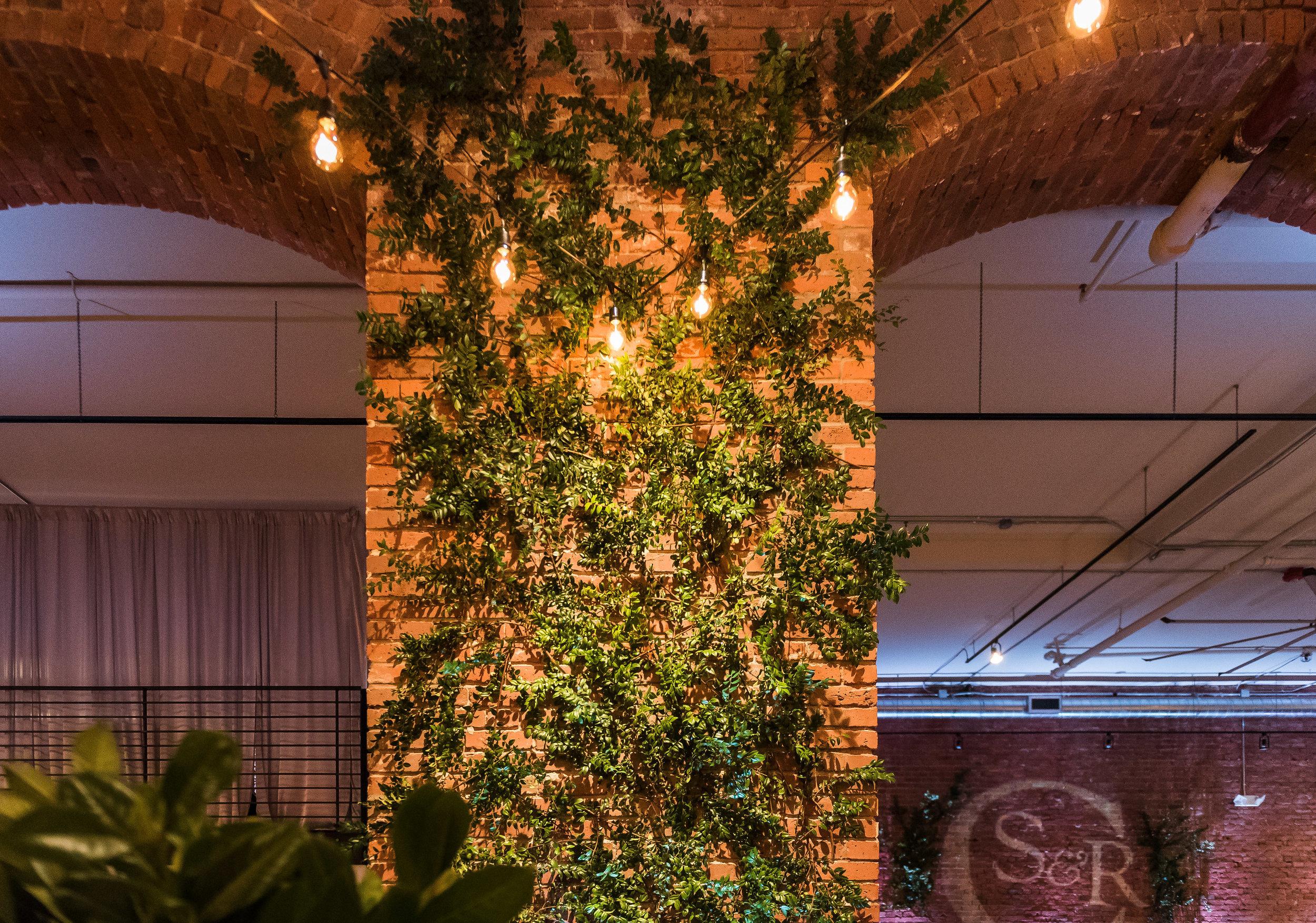 Bistro lights with vines climbing wall wedding.jpg