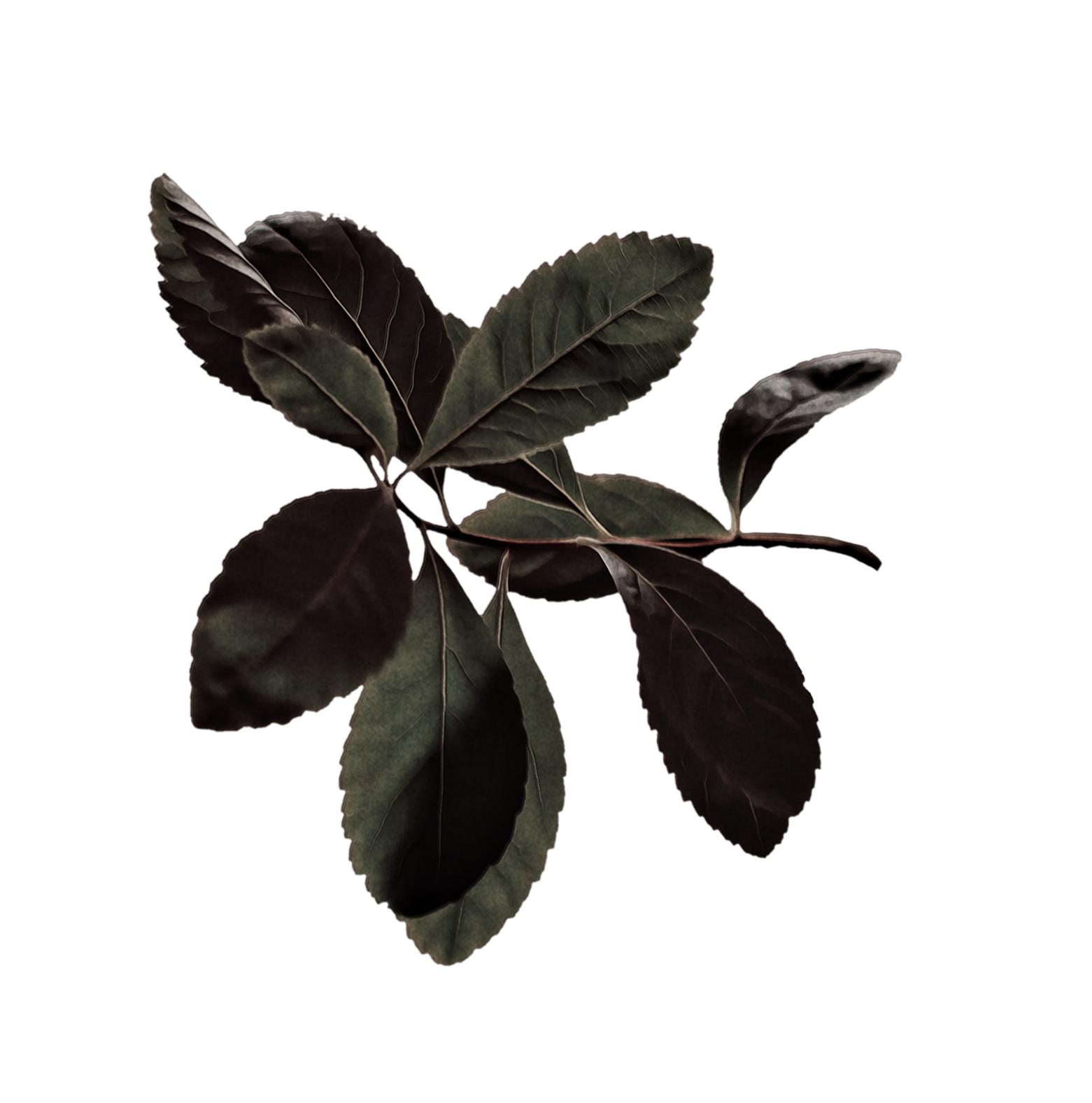 Dark Moss Coloured Leaves padded.png
