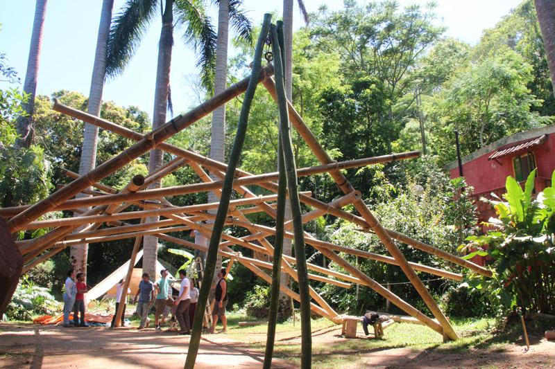 bambu31.jpg