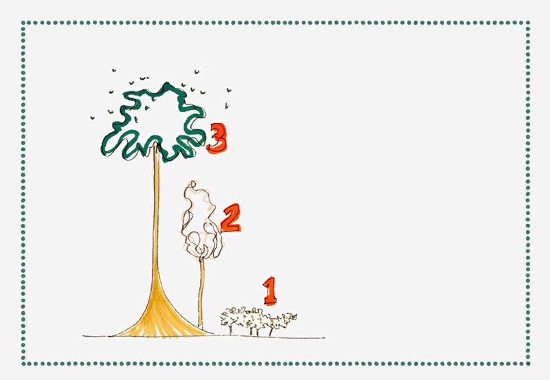 reforest_back+4.jpg