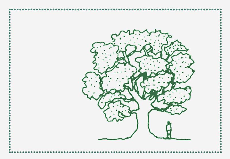 reforest_back+2.jpg