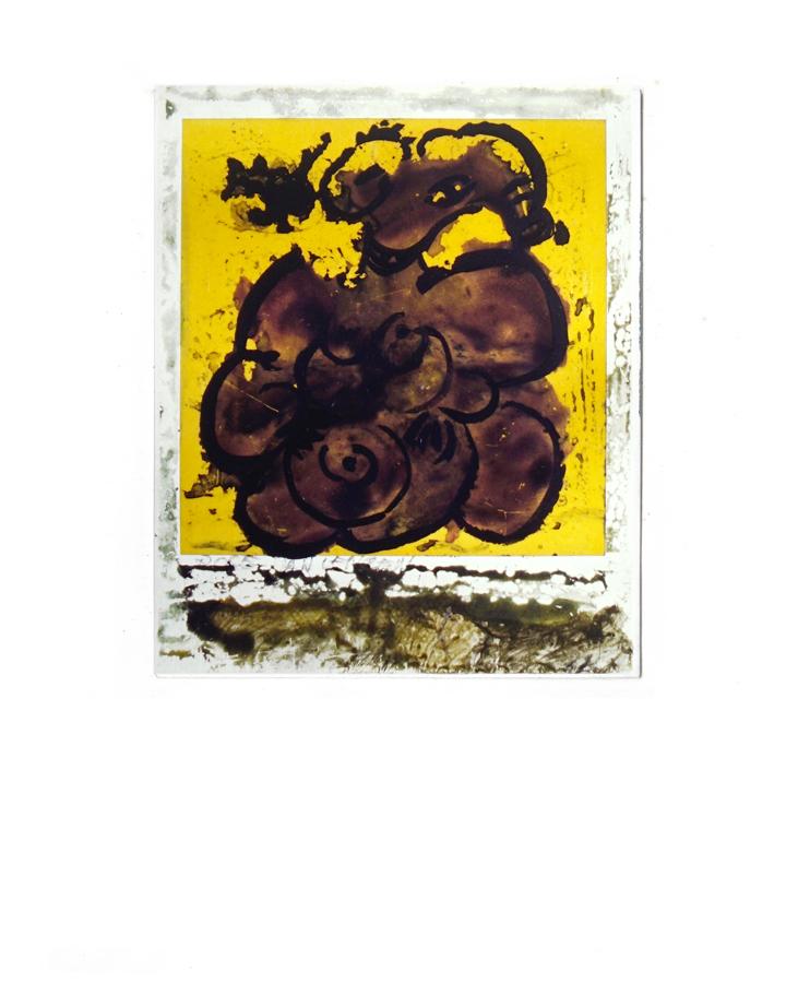 rose_polaroid24.jpg