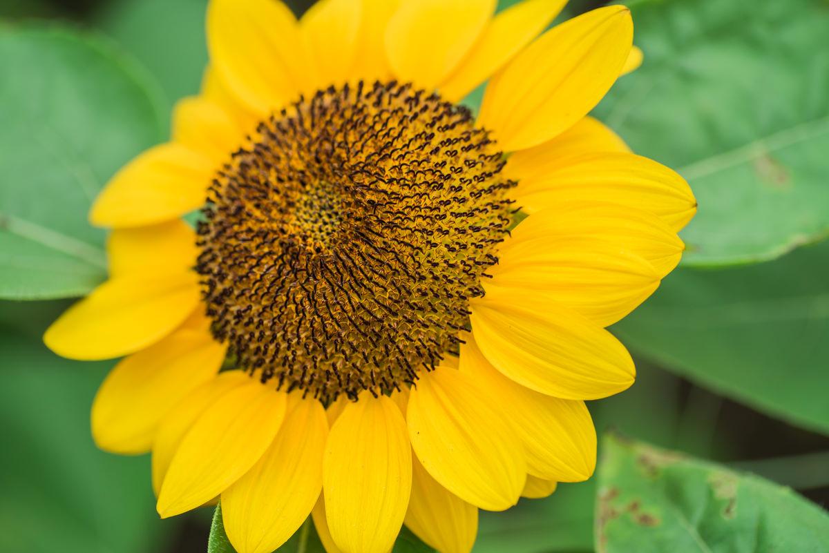 flower dome-5.jpg