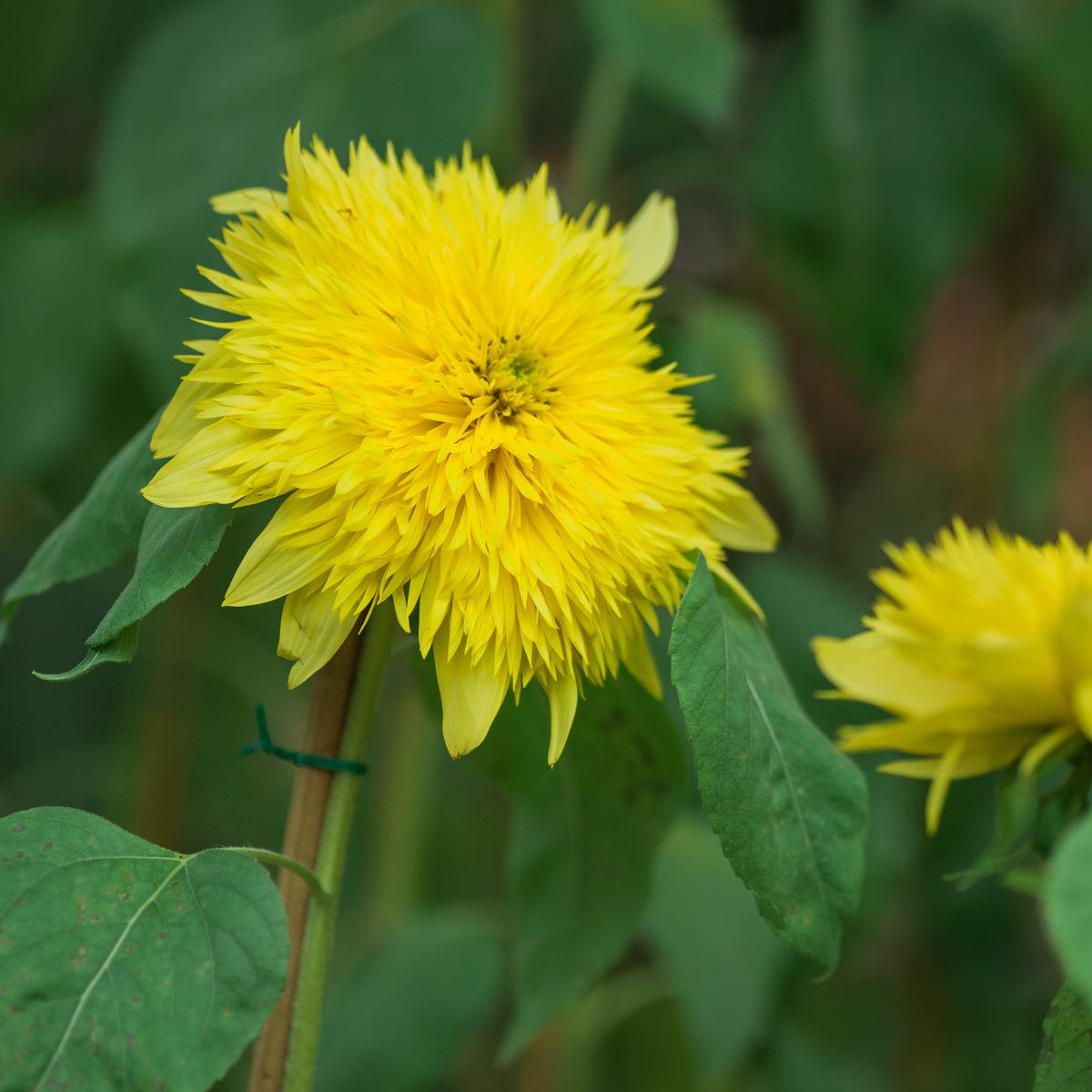 flower dome-4.jpg