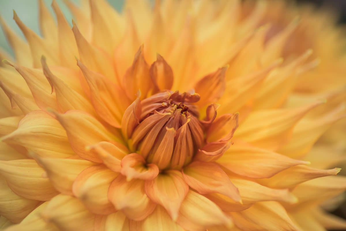flower dome-3.jpg