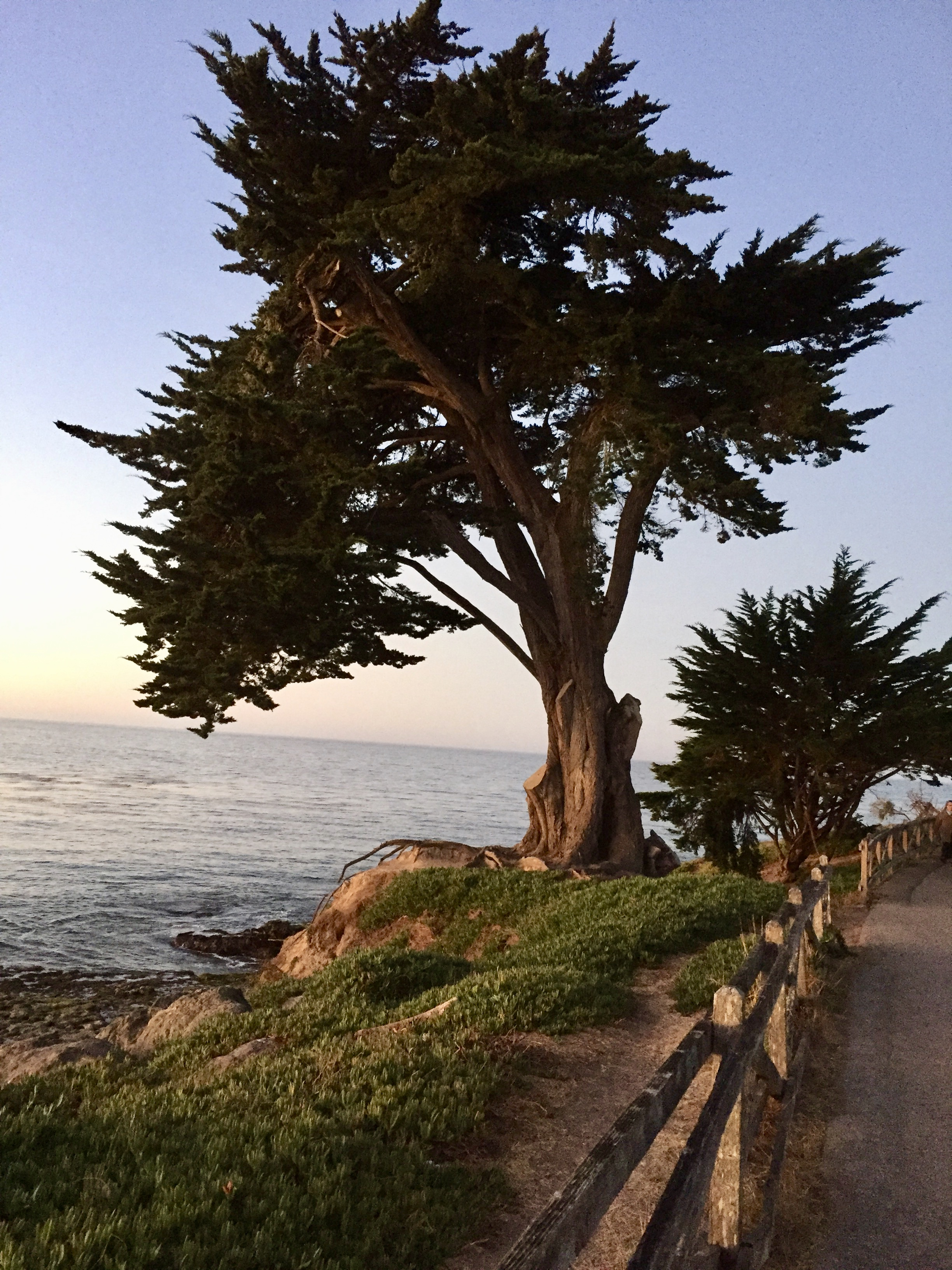 Cypress Morning Light Santa Cruz