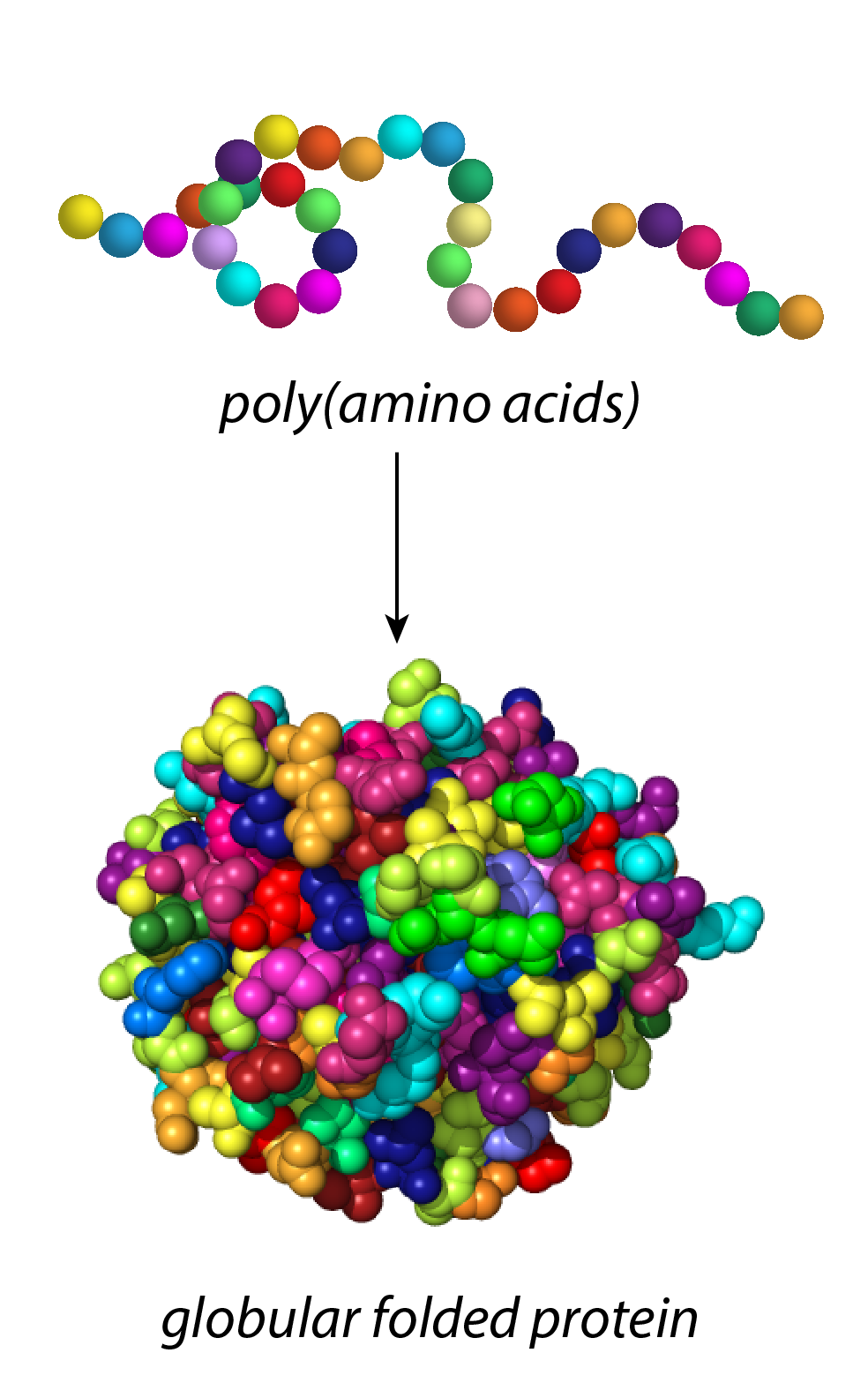website_colorful protein.png