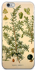 Juniper iPhone Case FREE SHIPPING 20% of profits donated to herbal scholarship
