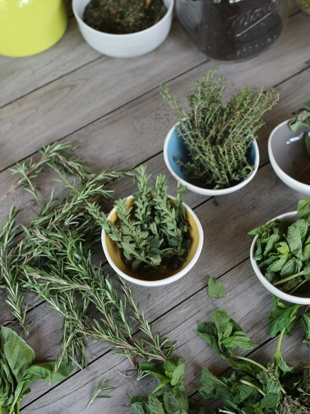Introductory Herbal Course - This self study program gives students with little or no herbal experience a glimpse into the world of herbs, kindling an enthusiasm for a lifelong course of learning.