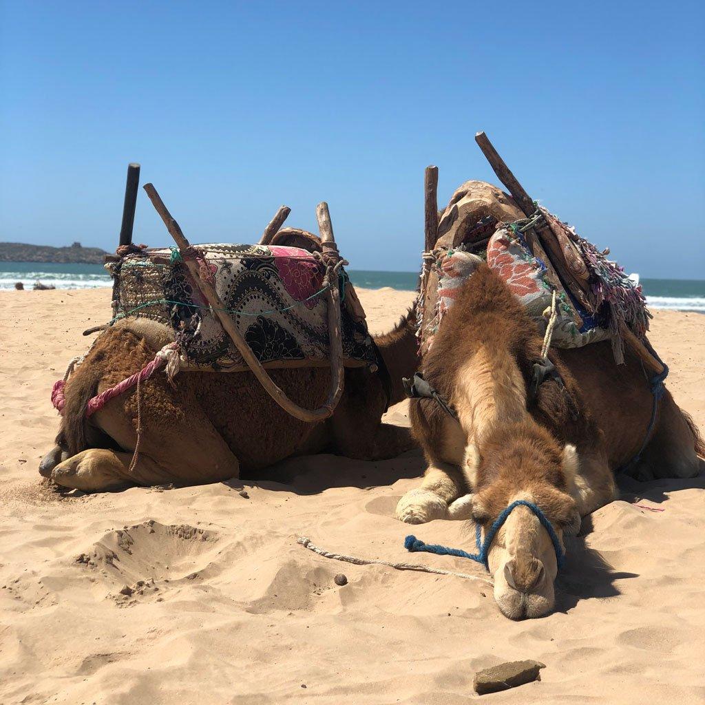 morocco_blog_3_1024x1024_aa653a72-527e-44e5-94fb-21189221c24a_1024x1024.jpg