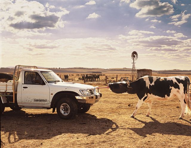 SC. CowPatrol.jpg