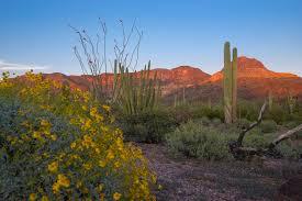 The amazing desert around Scottsdale.
