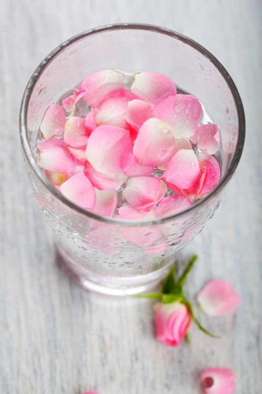 DIY: Homemade Rose Water