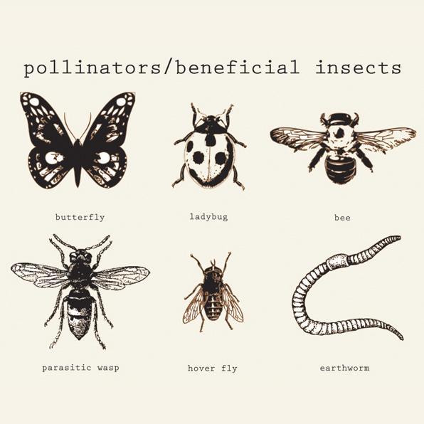trapp-pollinators