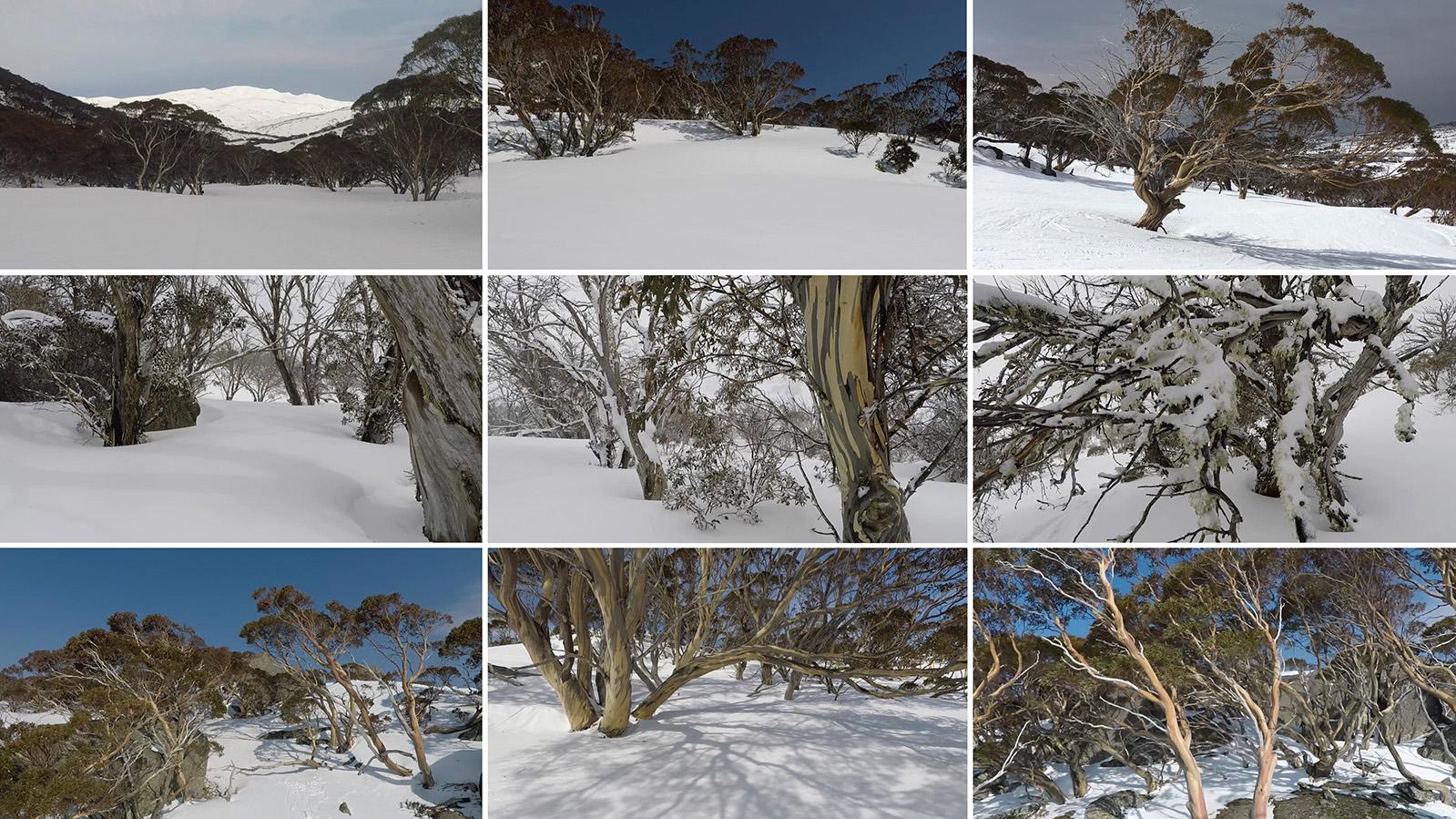 Crystal Wilderness_montage.jpg