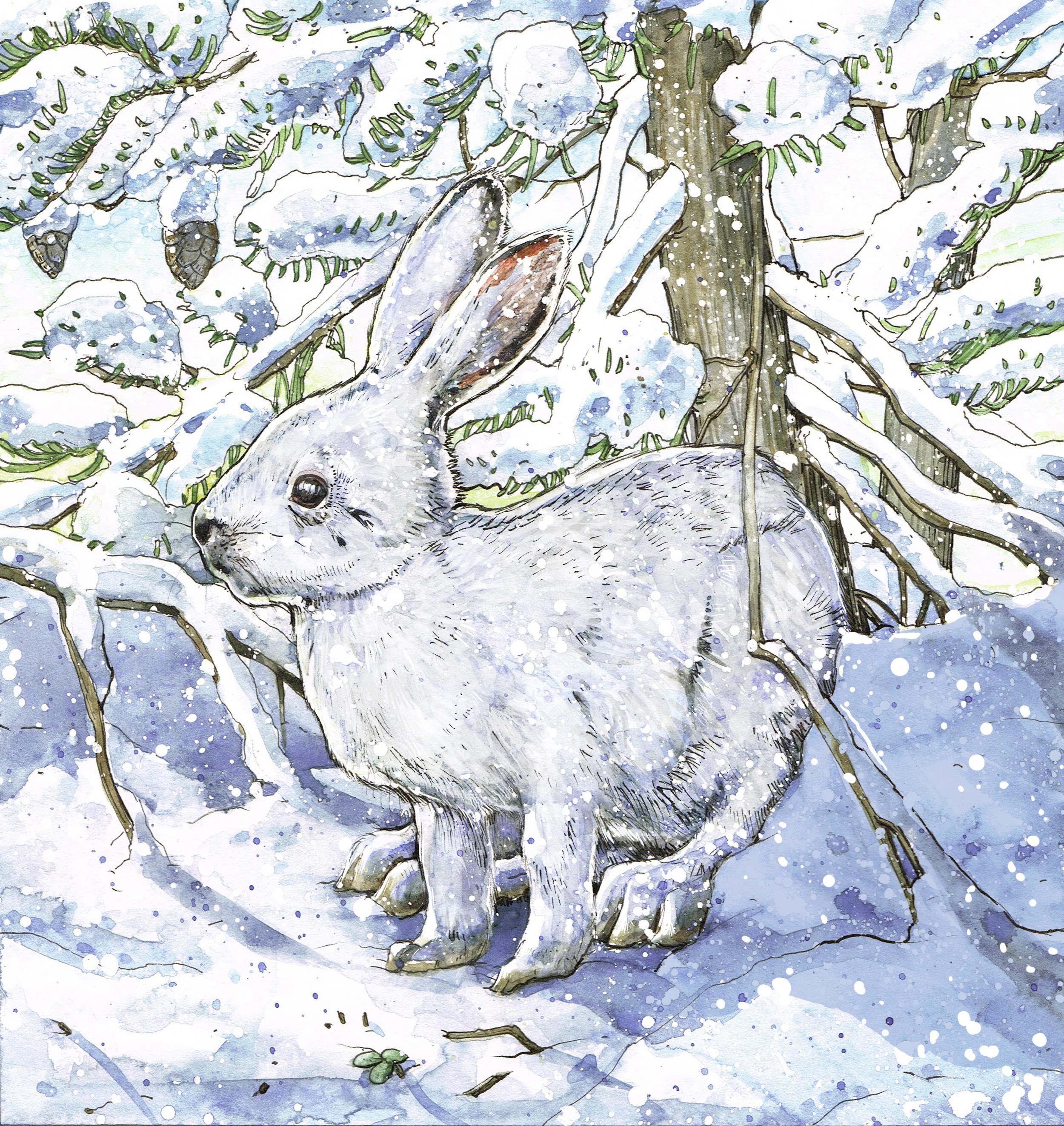 Hare_Winter.jpg